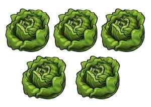 5 lettuces